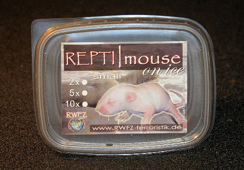 REPTI | mouse on ice